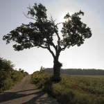 stonewall jackson prayer tree