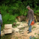 harvesting wood
